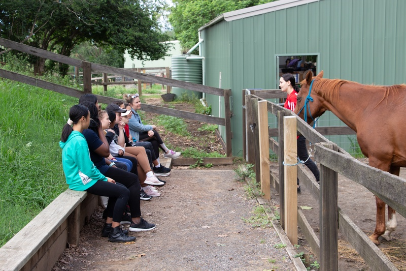 Activity Group 1 - Learning about Horse Grooming with Miss Bryant